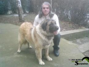 Shepherd Dog Krom