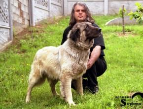 Shepherd Dog Grizli