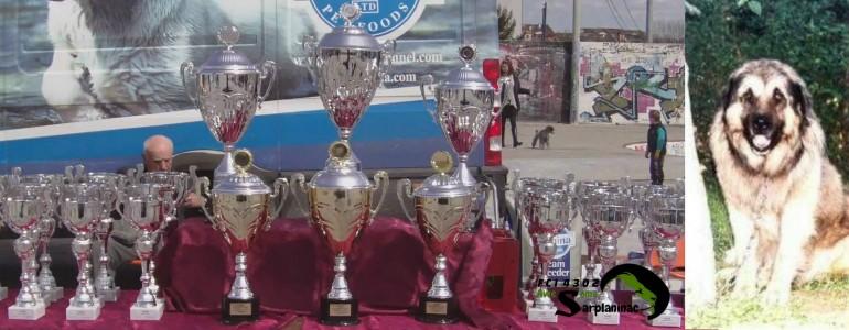 cacib jagodina dog show 2015