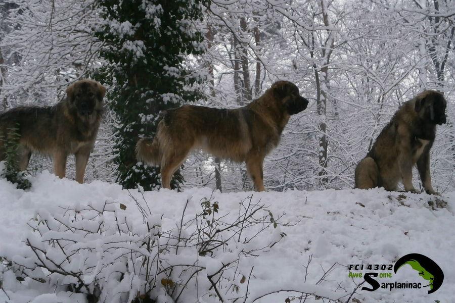 Ciarplanina Cani