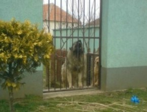 Dog Kennel Serbia