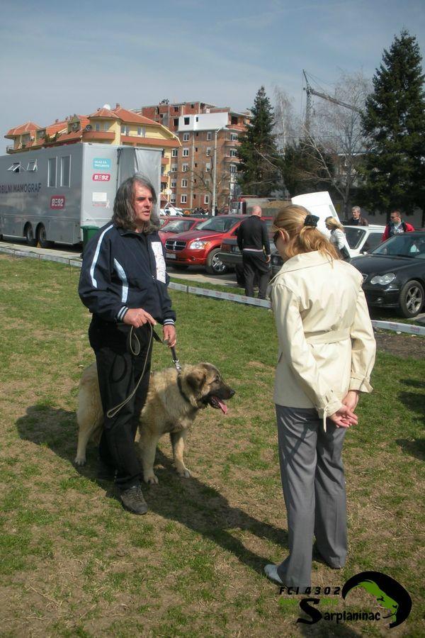 Sarplaninac Dog And Breeder