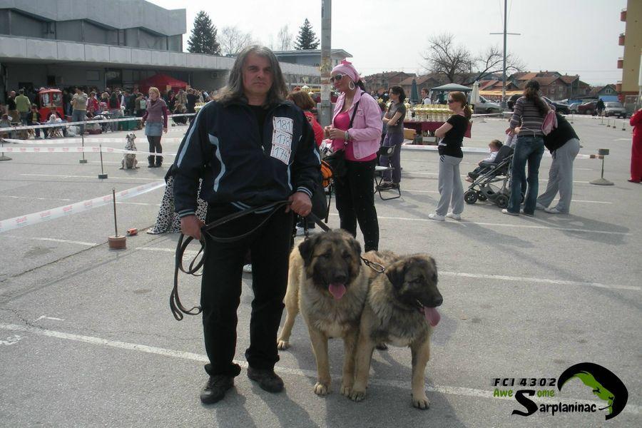 CACIB Dog Show