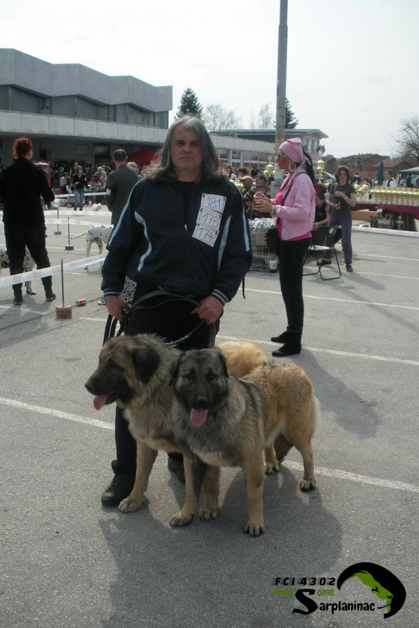Karabash Dogs Serbia