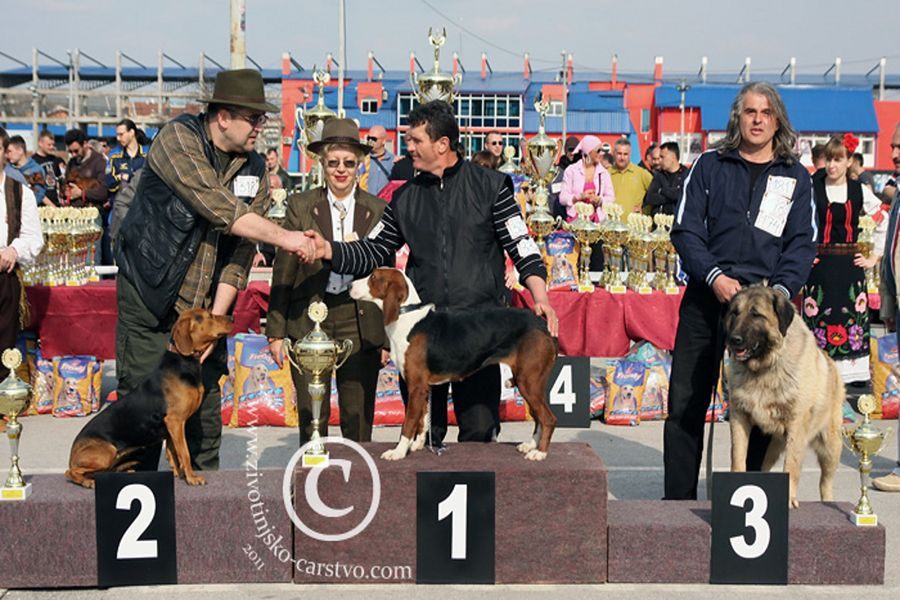 Dog Show Serbia
