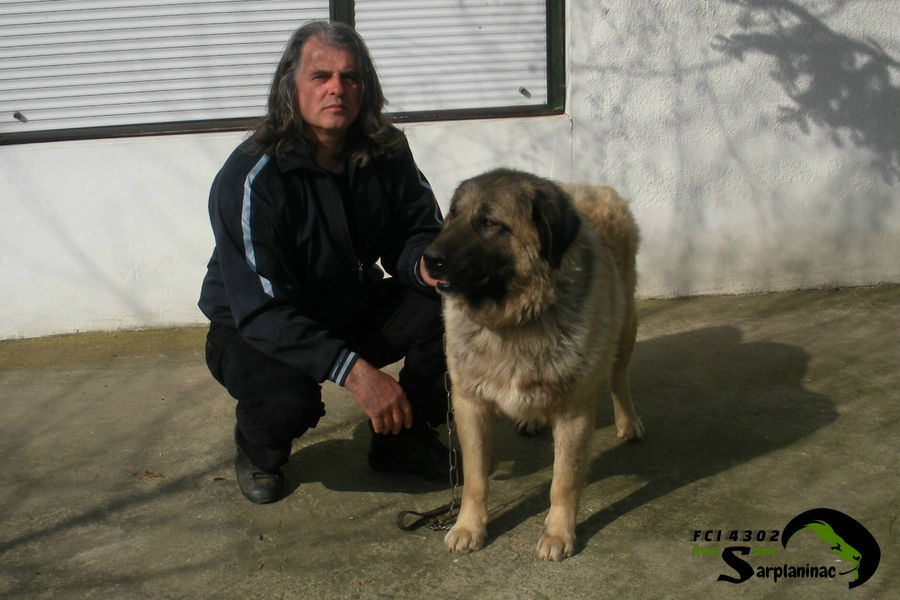 Karabash Dog Krom