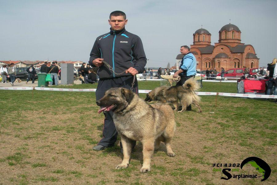 Dog Show Jagodina