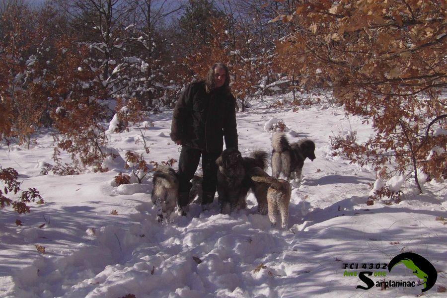 Four Black Dogs
