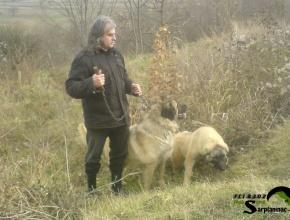 2 Karabash Dogs