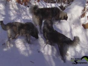 3 Black Dogs