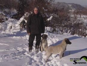 Two Karabash Dogs