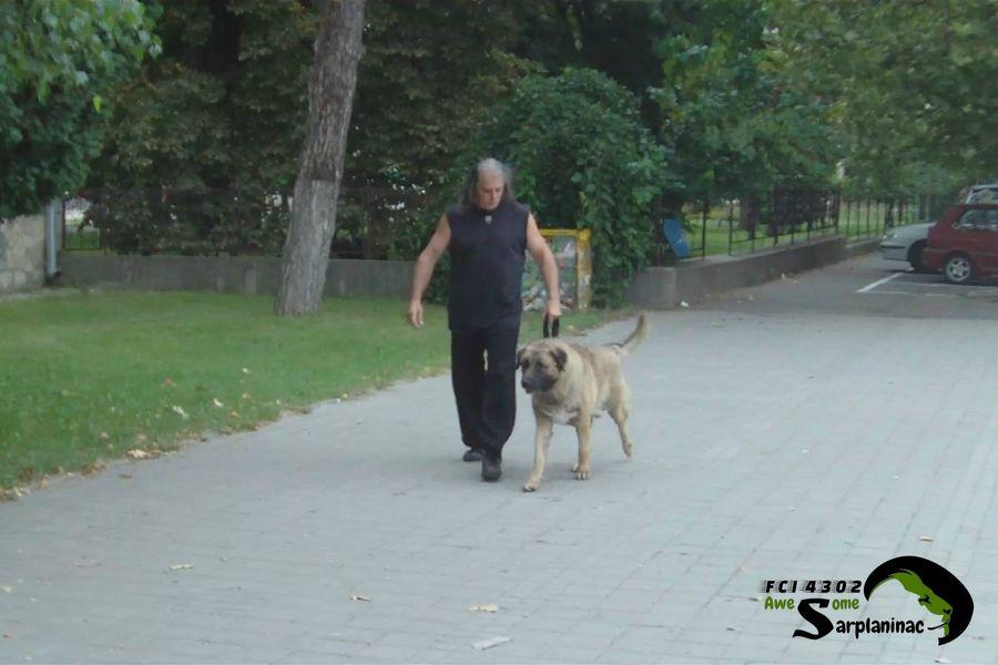 Karabash Dog