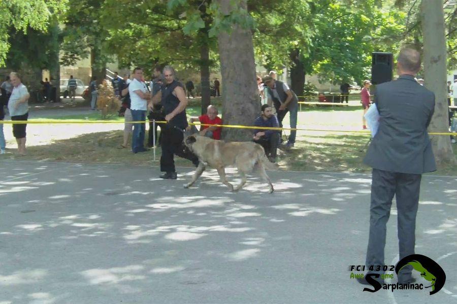 Karabash Dog Tyson