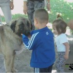 Negotin Dog Show