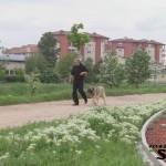 Paracin Dog Show