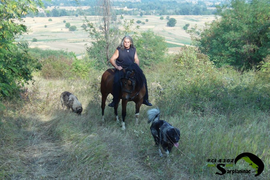 Sarplaninac Dogs And Horse