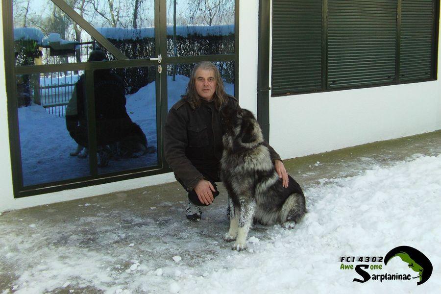 Male Shepherd Dog