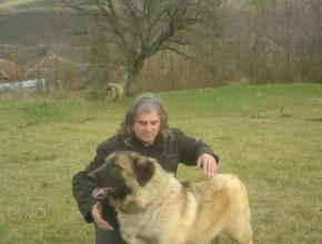 Awesome Shepherd Dog
