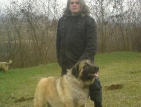 Shepherd Dog Serbia