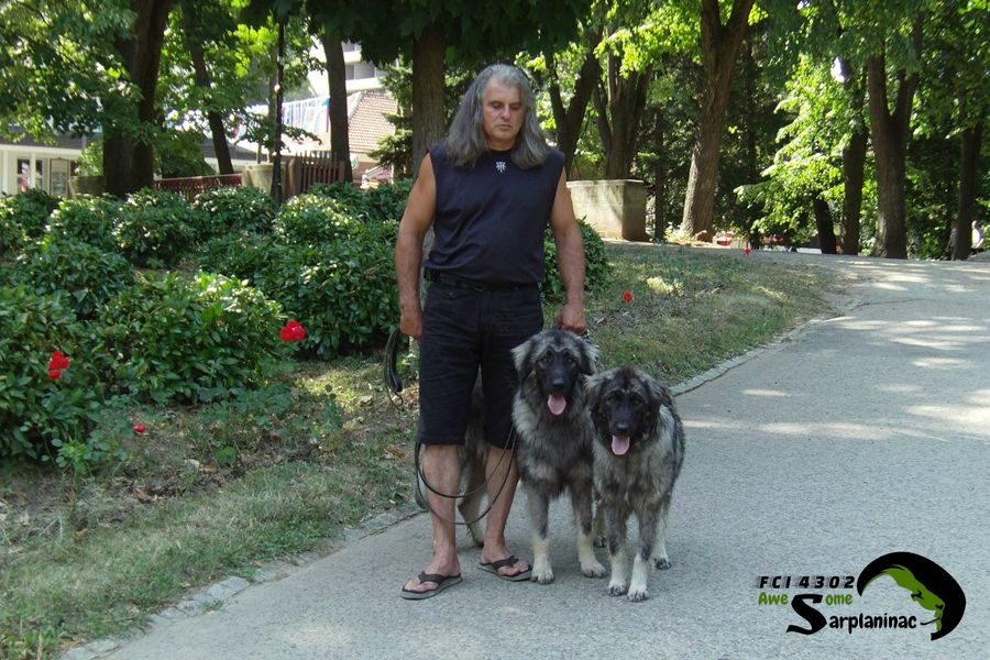 Breeder And Dogs
