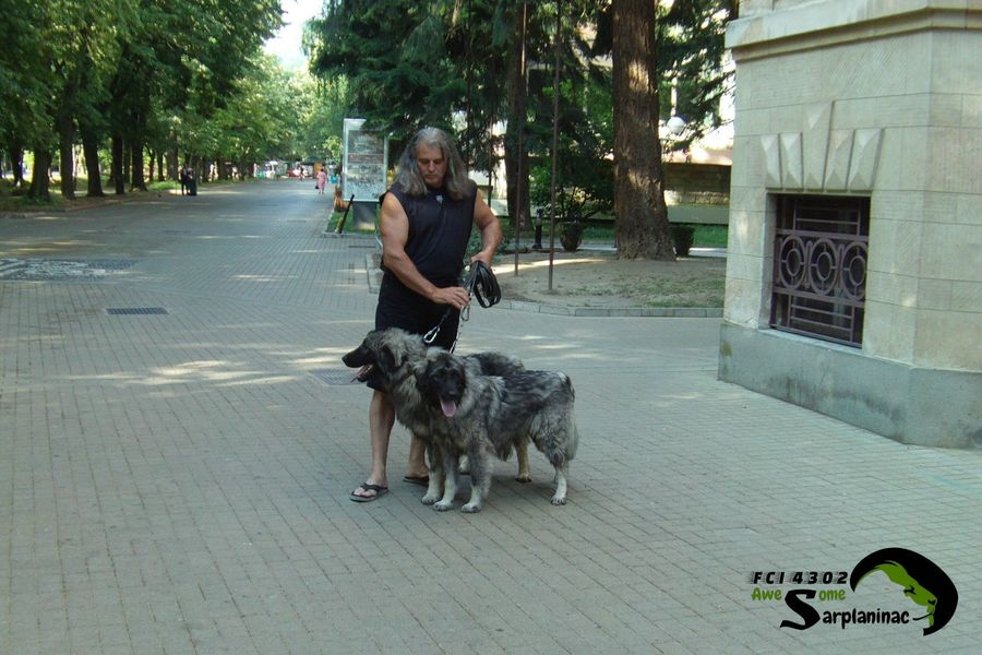 Young Dark Gray Dogs