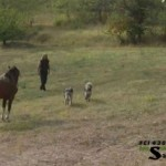 Man Horse And Dogs