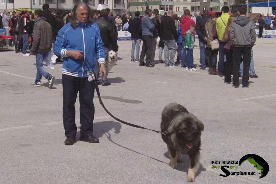 Dog Ben - CACIB Jagodina