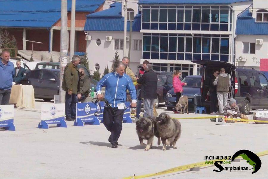Dogs Ben Hur And Big Haidy