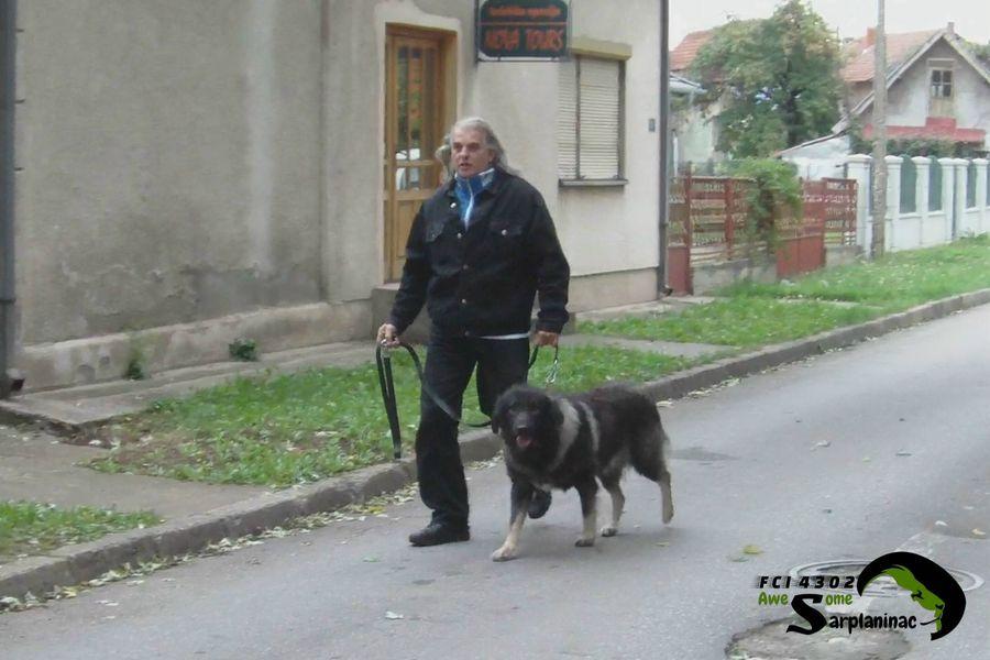 Dark Gray Dog Ben