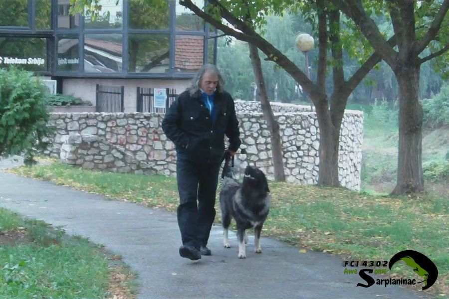 Black Dog Ben
