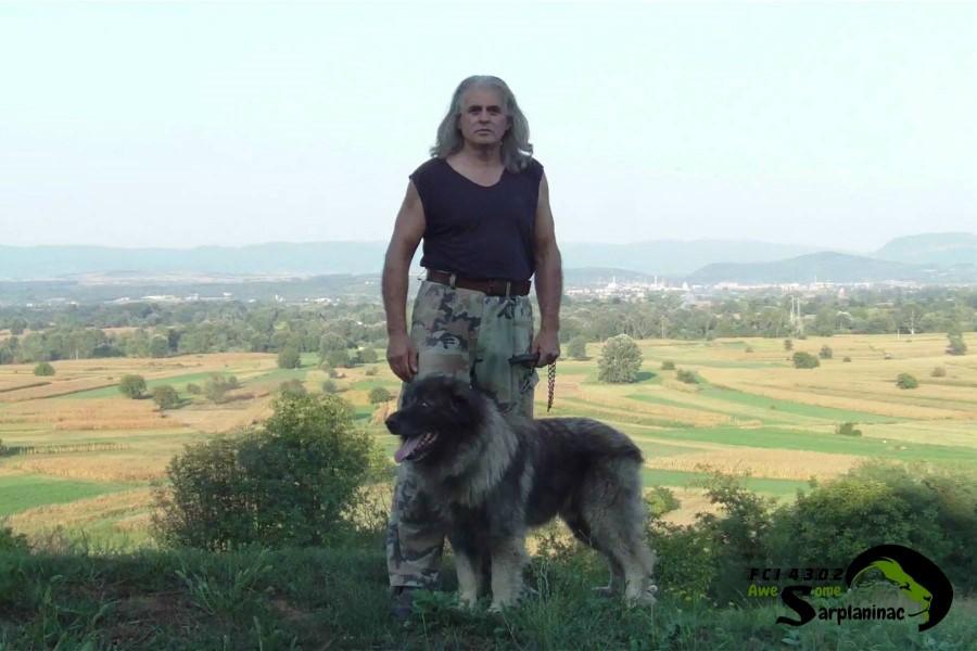 Medium Sized Dog