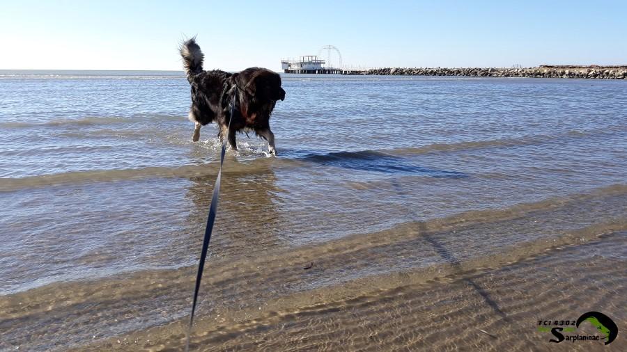 Shepherd Dog Beach